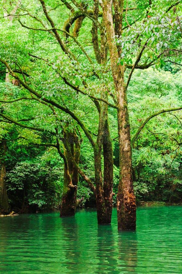 Bos in water stock afbeelding