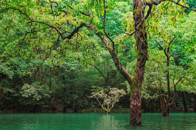 Bos in water royalty-vrije stock afbeeldingen