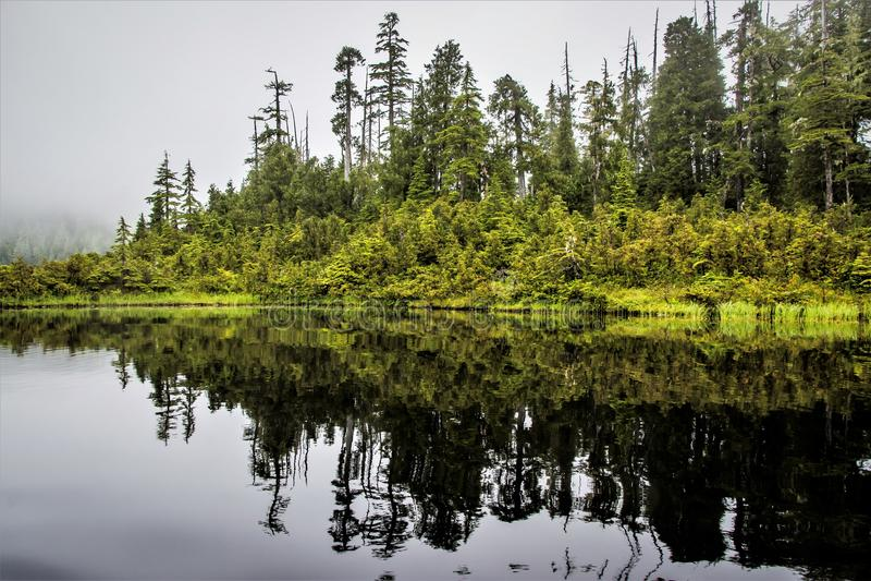 Bos in Water, Alaska royalty-vrije stock afbeeldingen