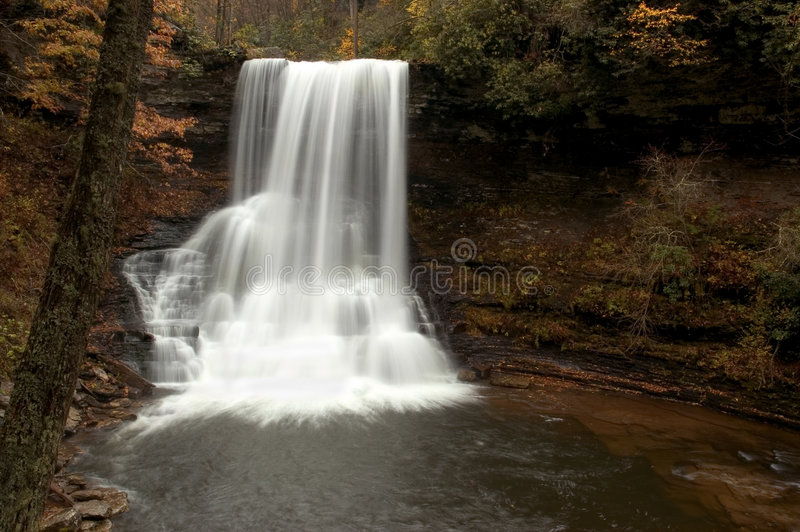 Bos Waterval stock foto