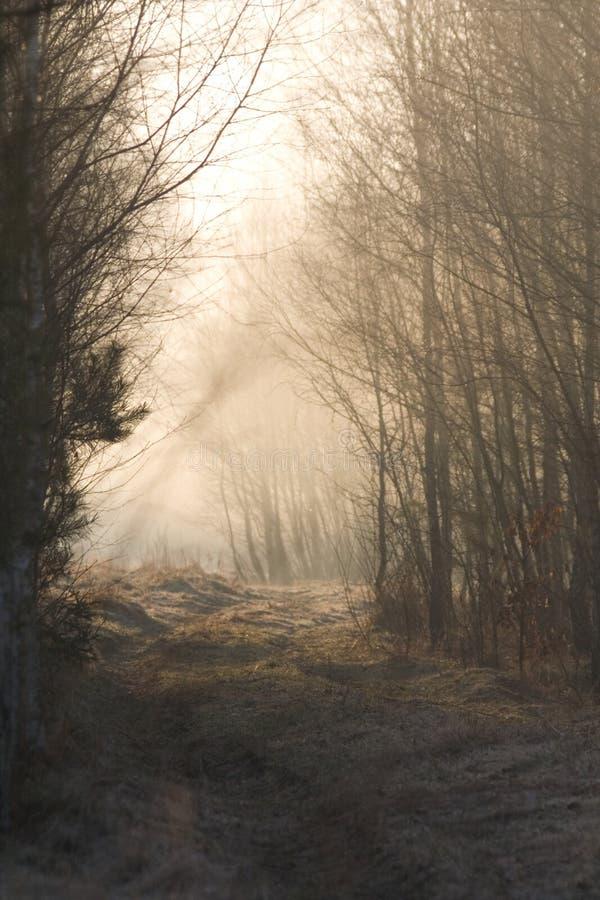 Bos weg in nevelige ochtend stock foto's