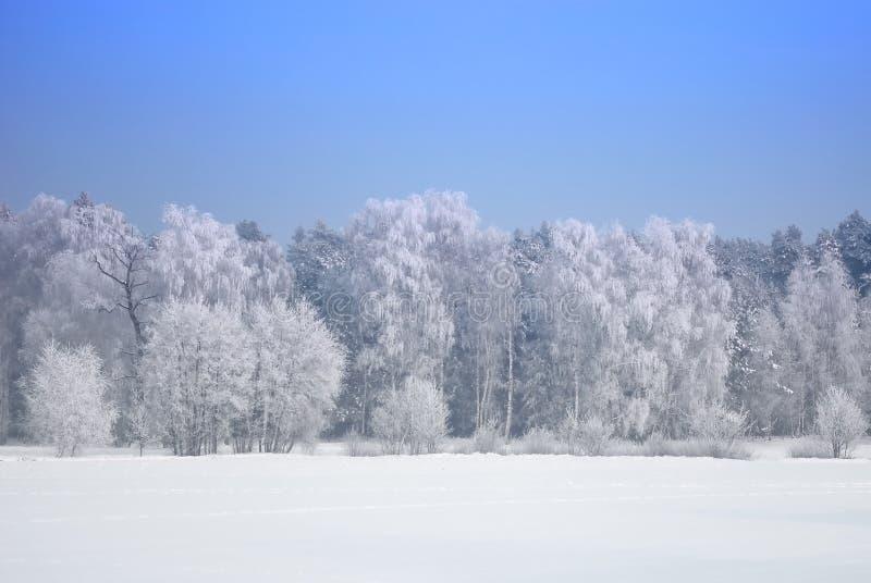 Bos in wintertijd royalty-vrije stock fotografie