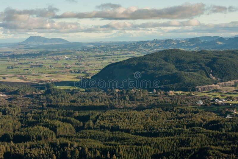 Bosaanplantingen in Rotorua royalty-vrije stock afbeelding