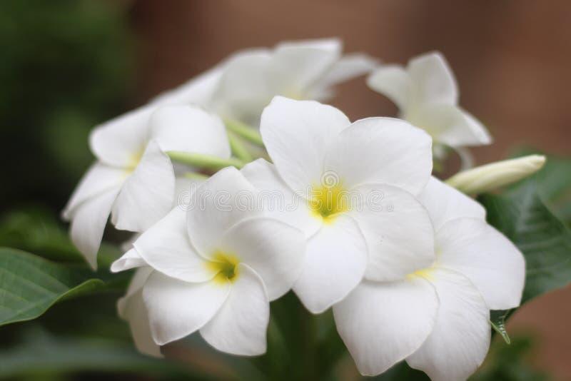 Bosatt bukett av blommor arkivbild