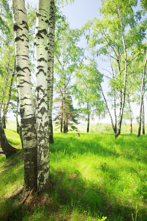 Bosberk stock fotografie