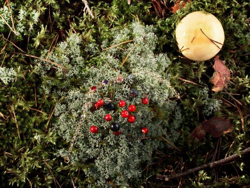 Bosbessen, Amerikaanse veenbessen, paddestoel op het mos royalty-vrije stock foto's