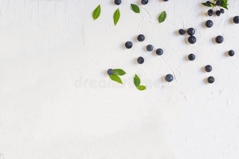 Bosbessen op witte achtergrond, textuur met exemplaarruimte die worden geïsoleerd De bosbessen zijn anti-oxyderende organische su stock fotografie