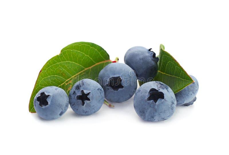 Bosbessenfruit stock foto's
