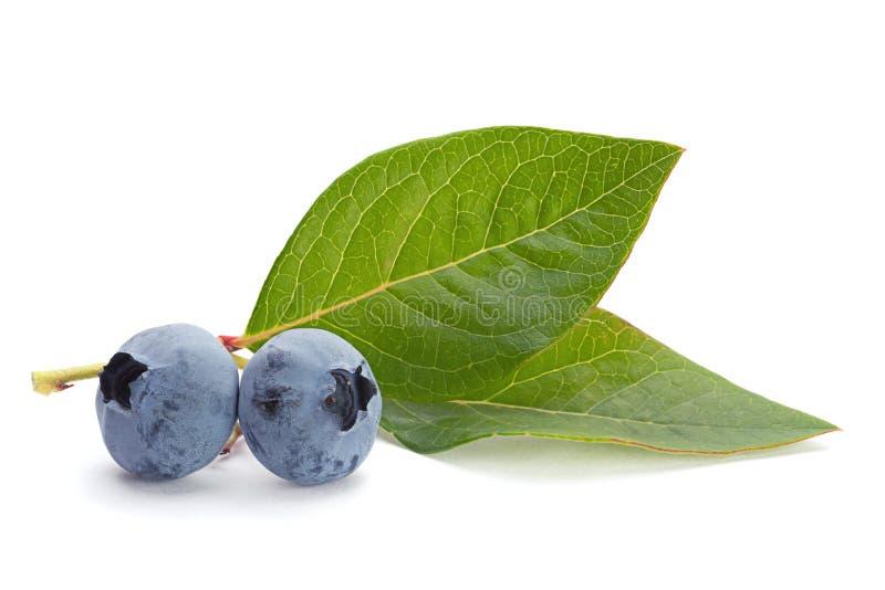 Bosbessenfruit met blad stock foto