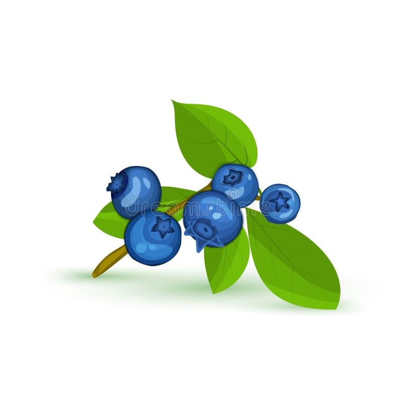 Bosbessentak en groene bladeren Vectorkaartillustratie Blauwe bosbes vers en sappig voor ontwerp van voedsel verpakking royalty-vrije illustratie