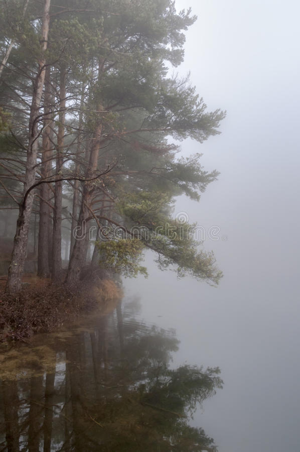 Bosbezinningen over het meer in de Mist royalty-vrije stock afbeeldingen
