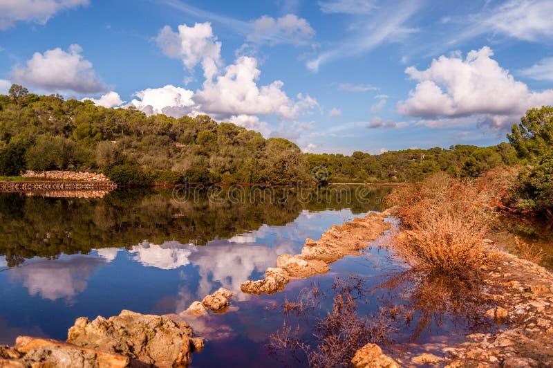 Bosbezinningen in water stock foto's