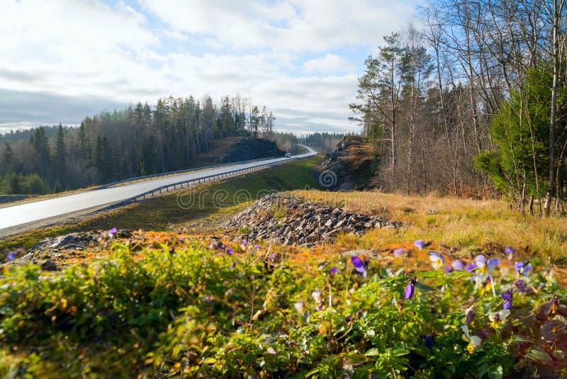 Bosbloemen langs weg a-121 Sortavala in Karelië Rusland stock foto