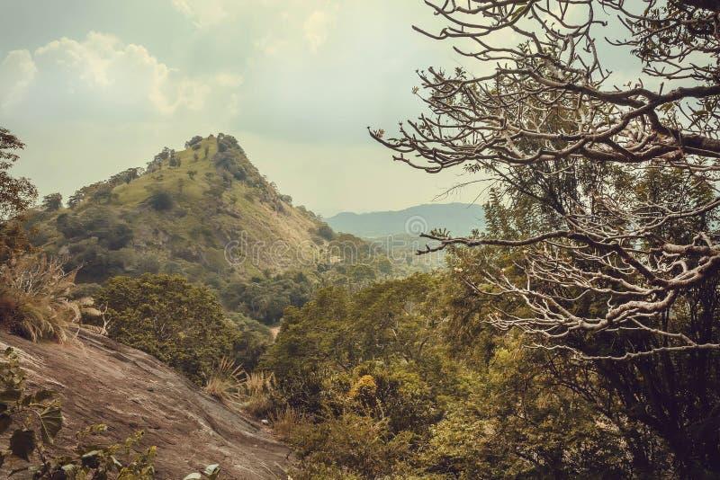 Bosbomen en berglandschap Houten bosje bij zonnig vochtig weer in Sri Lanka royalty-vrije stock fotografie