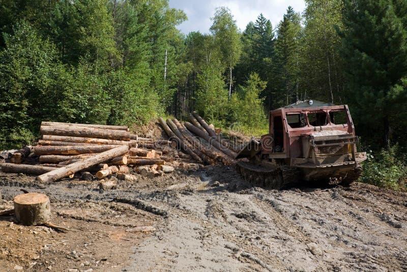 Bosbouw royalty-vrije stock afbeeldingen
