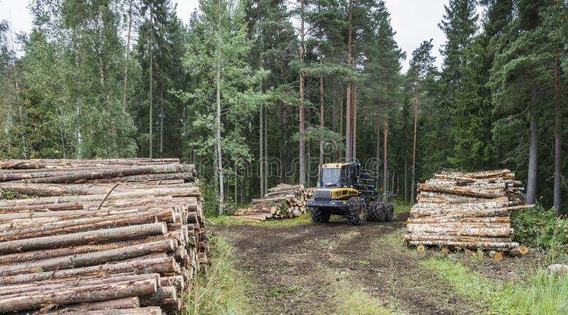 Bosbouw in Finland stock afbeeldingen