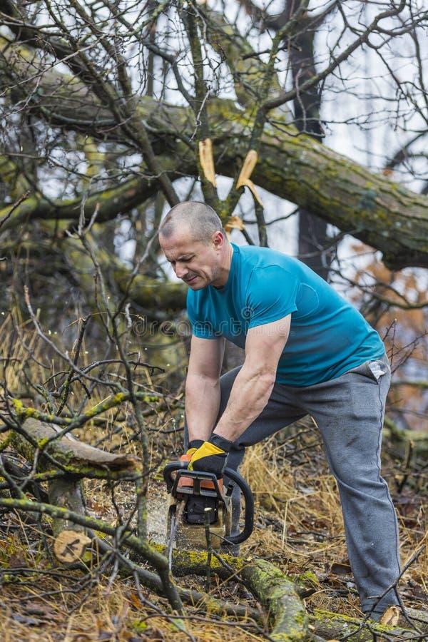 Bosbouwarbeider - de houthakkerswerken met kettingzaag Hij snijdt groot stock afbeelding