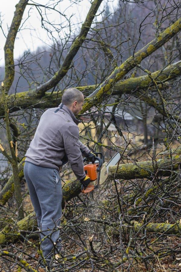 Bosbouwarbeider - de houthakkerswerken met kettingzaag Hij snijdt groot royalty-vrije stock foto's