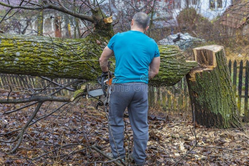 Bosbouwarbeider - de houthakkerswerken met kettingzaag Hij snijdt groot stock foto's