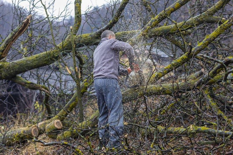 Bosbouwarbeider - de houthakkerswerken met kettingzaag Hij snijdt groot royalty-vrije stock afbeelding