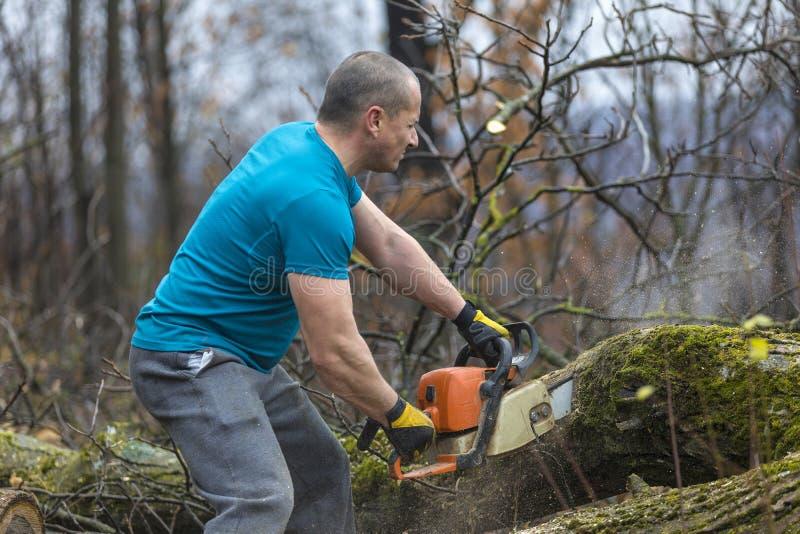 Bosbouwarbeider - de houthakkerswerken met kettingzaag Hij snijdt groot stock afbeeldingen