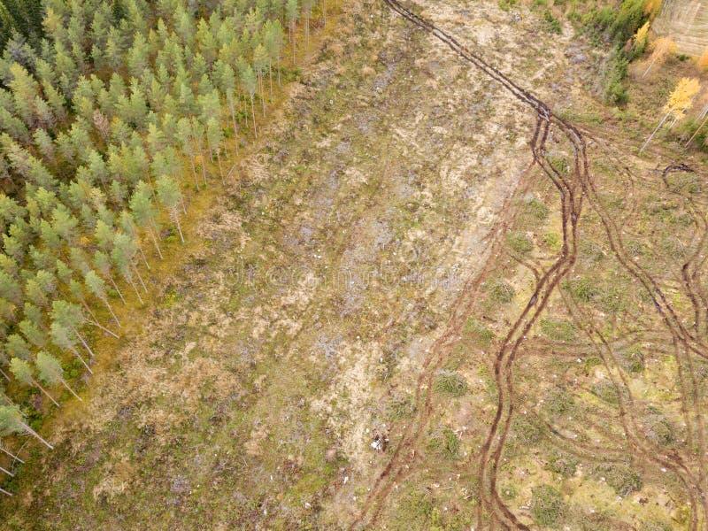 Bosbouwtrekkersporen na het ruimen in het bos royalty-vrije stock afbeeldingen