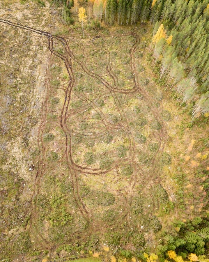 Bosbouwtrekkersporen na het ruimen in het bos royalty-vrije stock fotografie