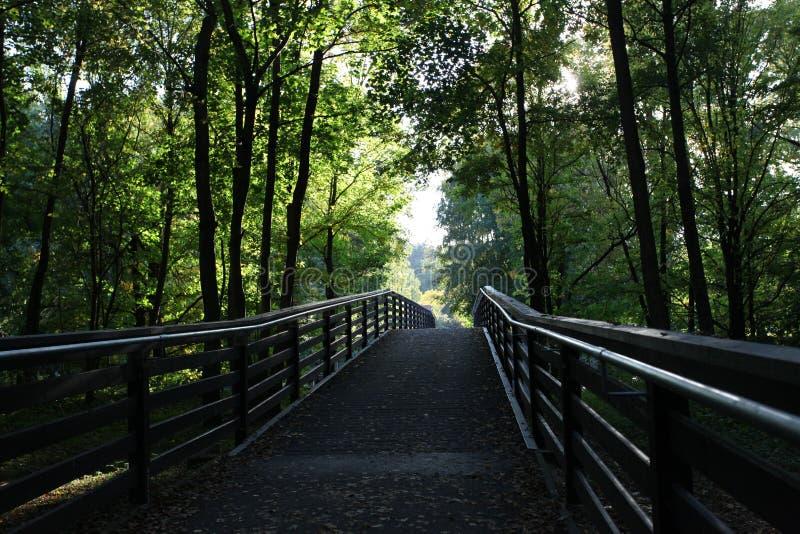Bosbrug in de zomer stock fotografie