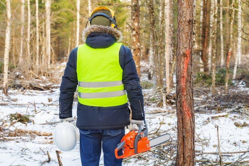 Boscaiolo con gli alberi contrassegnati vicini della motosega in foresta immagini stock libere da diritti
