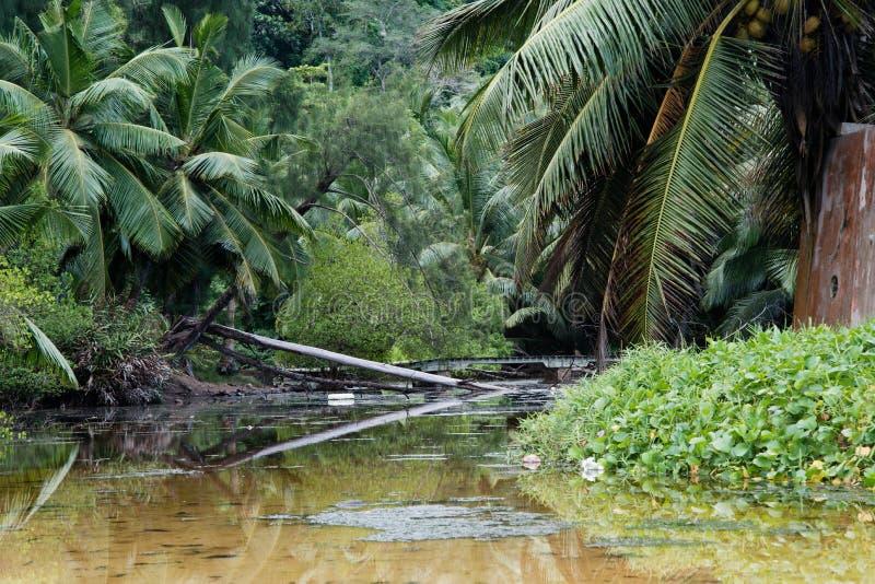 Boschetti in una foresta tropicale vicino ad un piccolo fiume fuori dalle rive delle Seychelles nell'Oceano Indiano fotografie stock libere da diritti