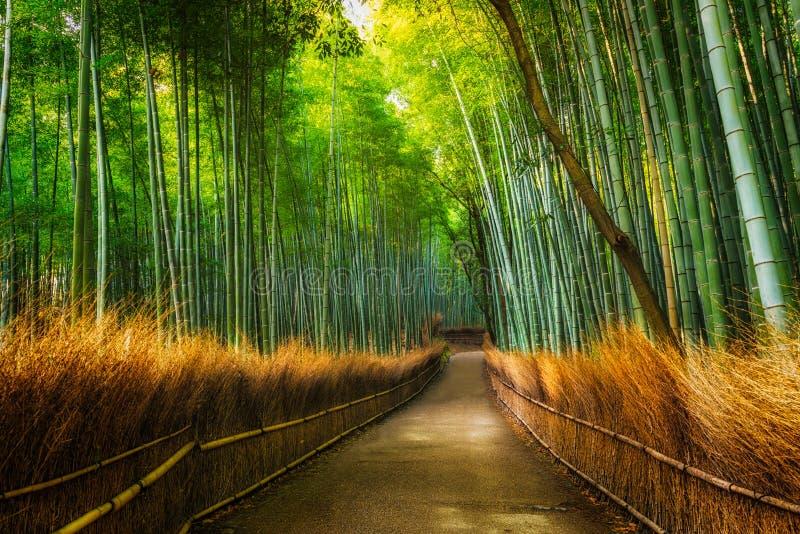Boschetto del bambù di Arashiyama fotografie stock libere da diritti