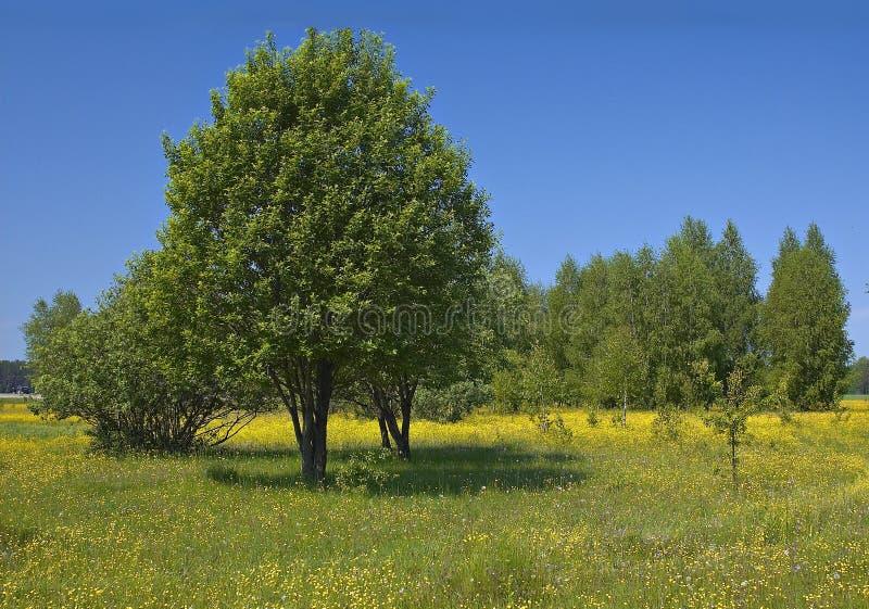 Boschetto dell'albero fotografia stock libera da diritti