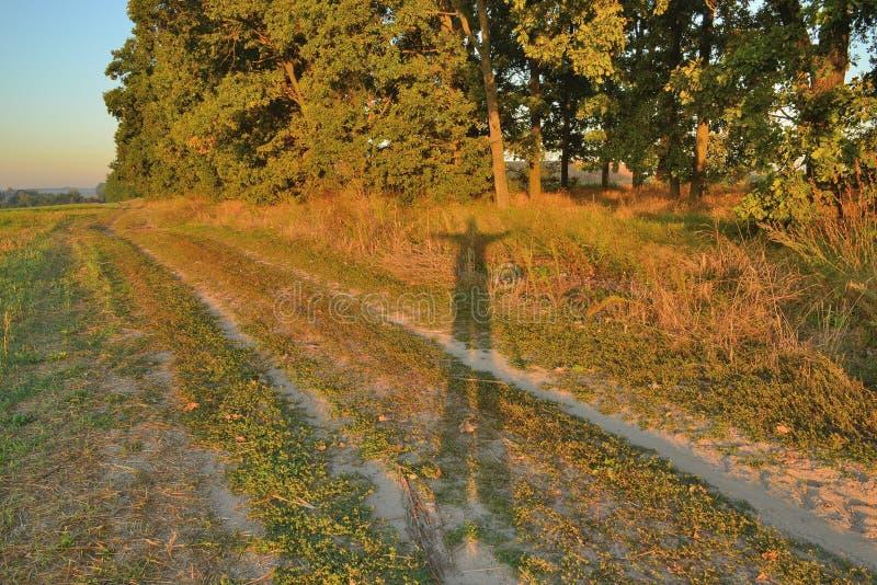Boschetto della quercia nei raggi dell'alba fotografia stock libera da diritti