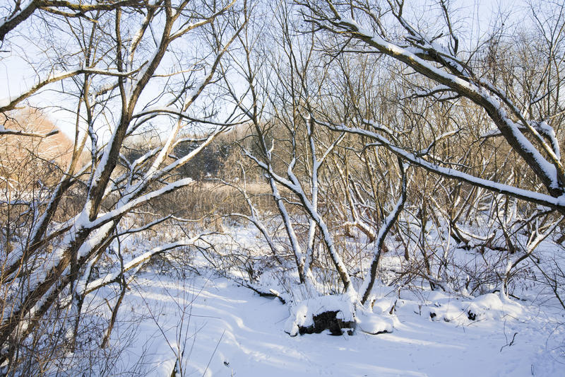 Boschetto di inverno fotografie stock