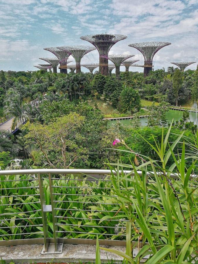 Boschetto di Supertree a Singapore fotografia stock
