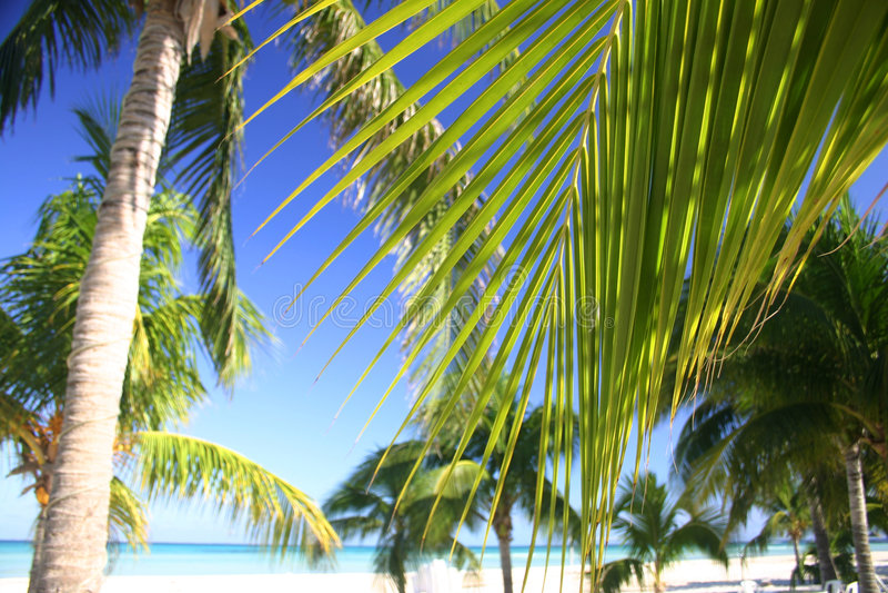 Boschetto tropicale della palma fotografie stock