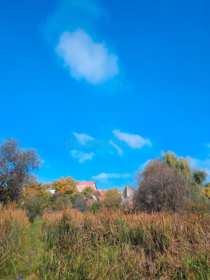 bosco ceduo e paludi vicino al villaggio al mezzogiorno fotografia stock libera da diritti