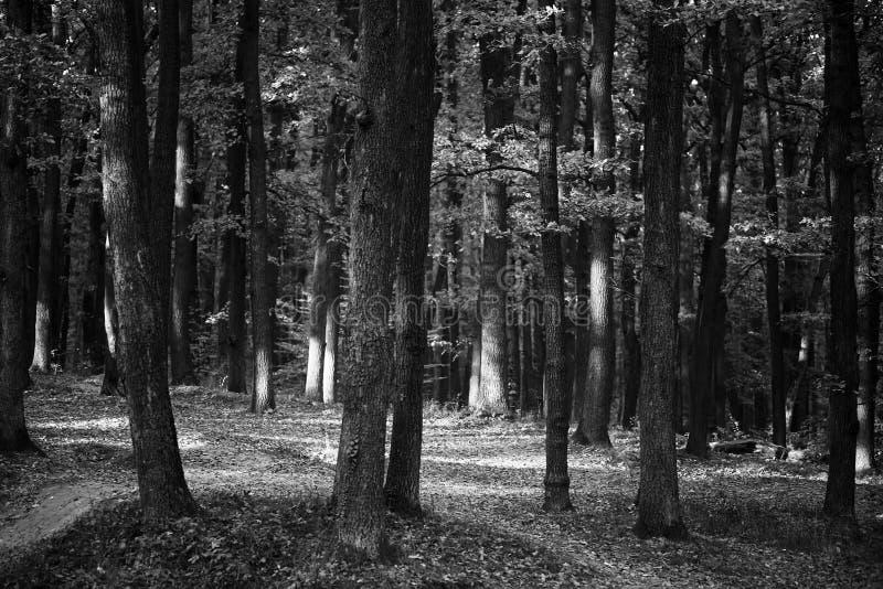 Bosco verde e frondoso in bianco e nero immagini stock