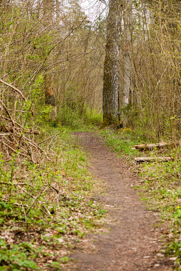 Download Bosdetails in de lente stock afbeelding. Afbeelding bestaande uit reis - 54077693