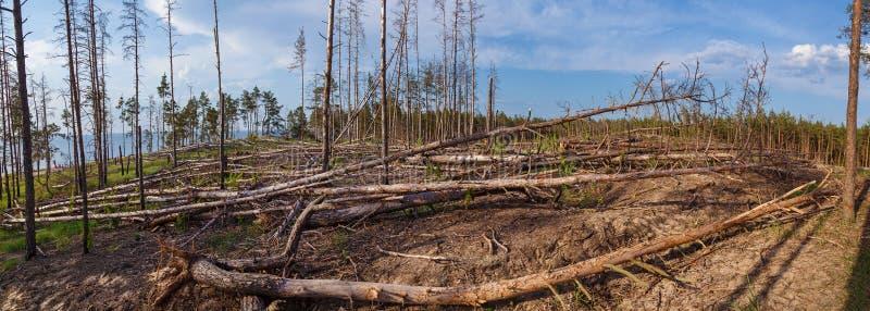 Bosdieperceel van de bomen wordt ontruimd stock fotografie