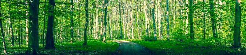 Bosdieweg door groene bomen wordt omringd royalty-vrije stock afbeeldingen
