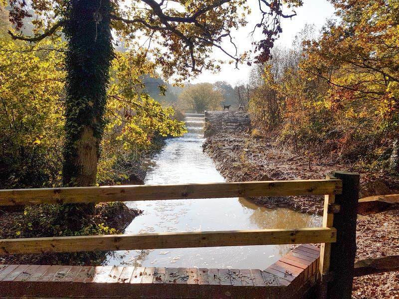 Bosdrager en beek door het bos van Sussex stock afbeeldingen
