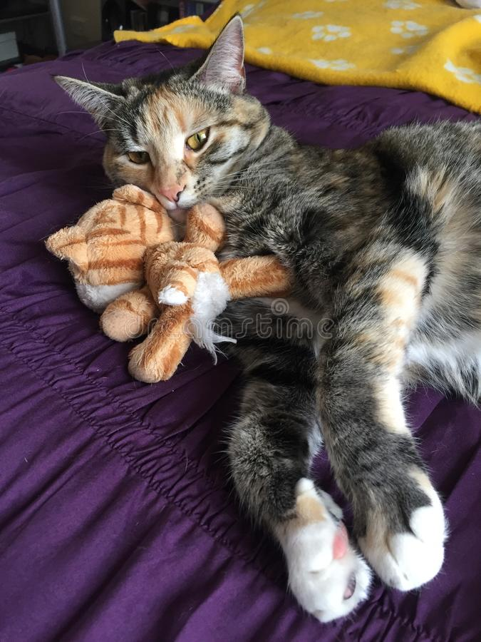 Boshafte Tabby Tortoiseshell Girl Cat lizenzfreies stockfoto