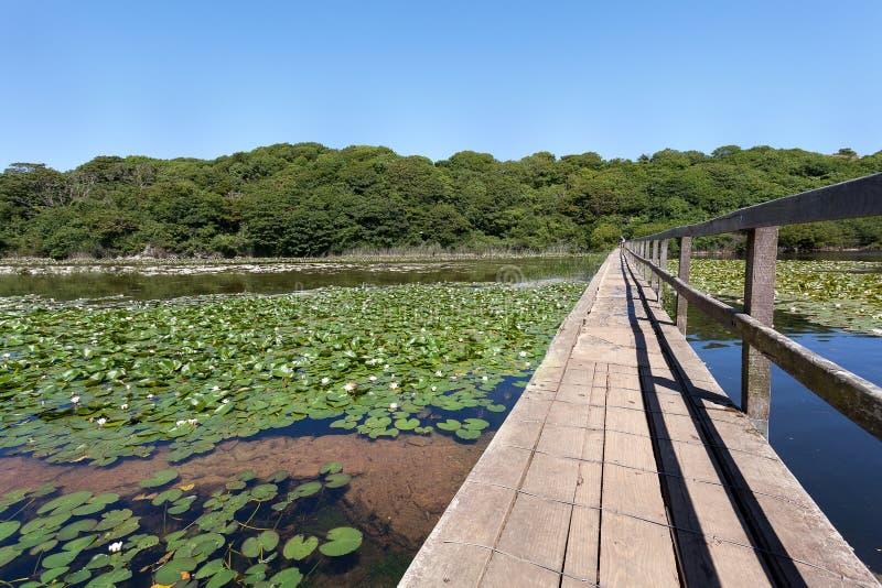 Download Bosherston lily ponds stock image. Image of pond, lake - 34583521