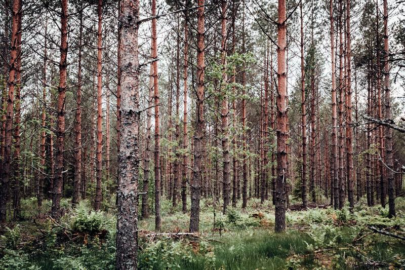 Boshoogtepunt van bomen stock foto