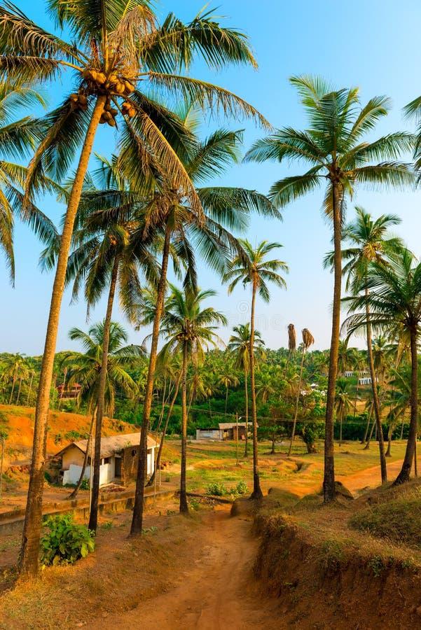 Bosje met lange kokospalmen stock foto
