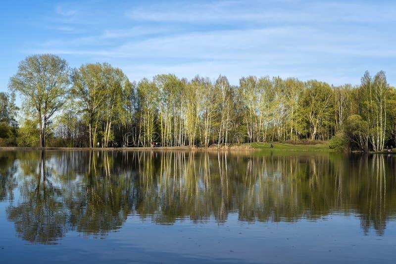Bosje op de kust van het meer stock foto's