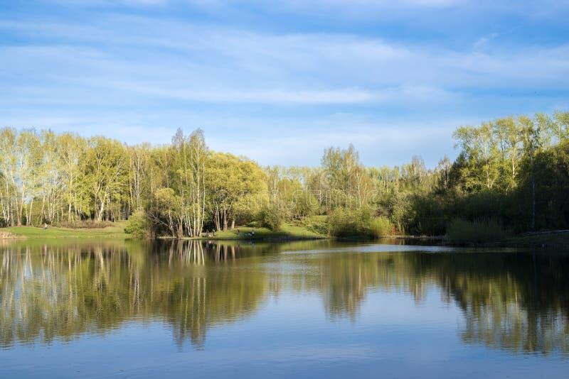 Bosje op de kust van het meer stock afbeelding