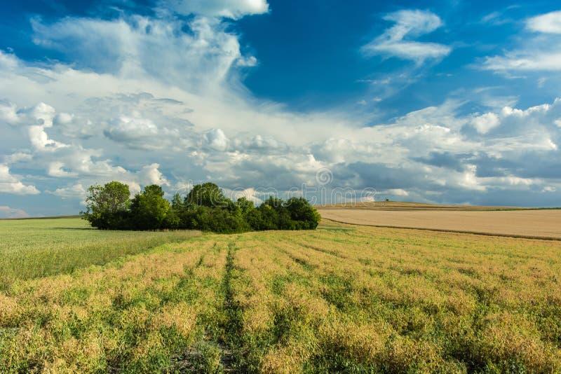 Bosje op gebieden en wolken in de hemel royalty-vrije stock foto's