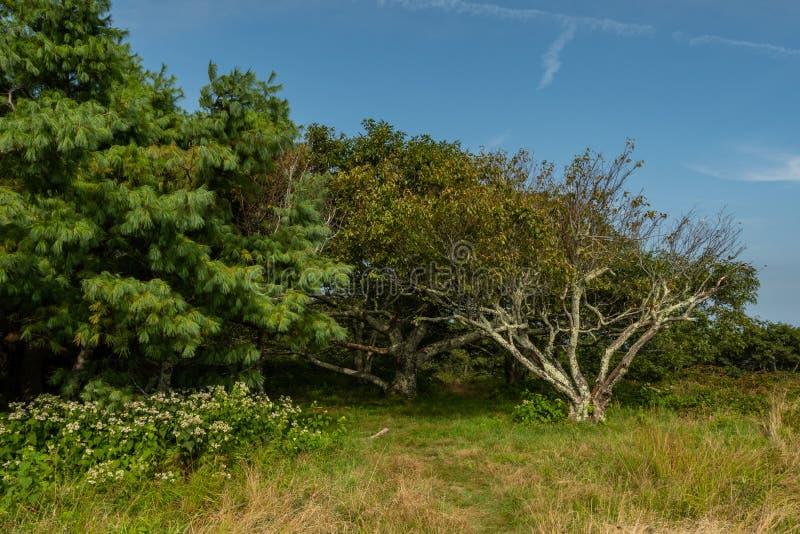 Bosje van Bomen op Gregory Bald royalty-vrije stock afbeeldingen